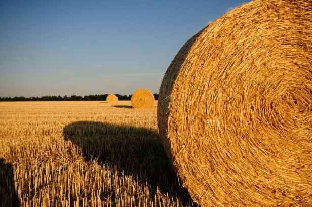 field summer straw straw bales